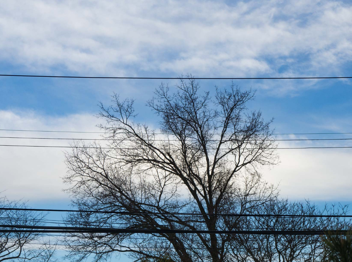 this image shows commercial tree service in lake forest