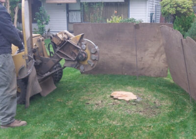 this image shows stump grinding in lake forest ca