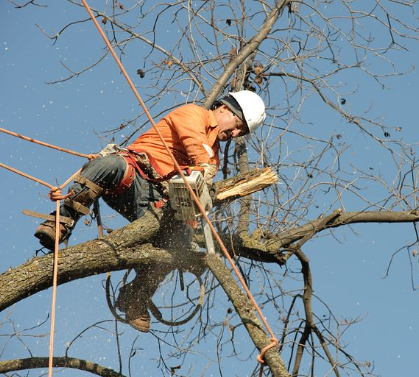 this image shows tree chipper in lake forest, california
