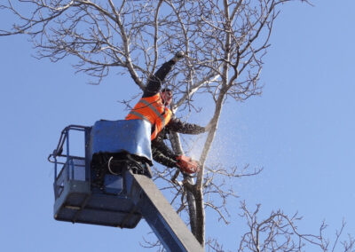 this is a picture of commercial tree service