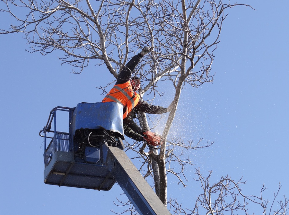 this image shows commercial tree service in lake forest, california