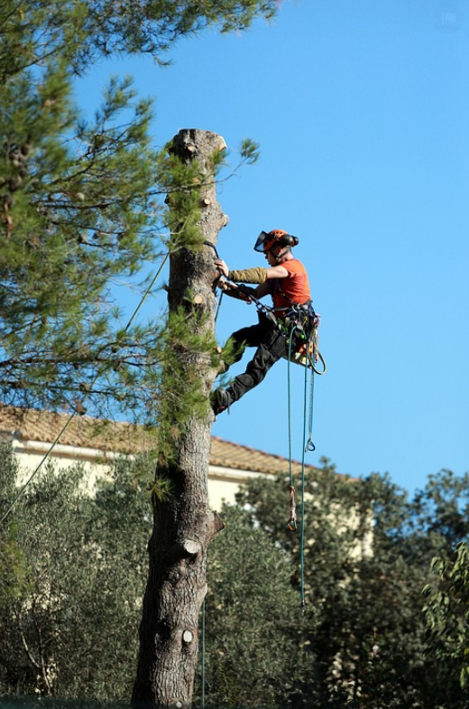 this image shows residential tree services in lake forest, california