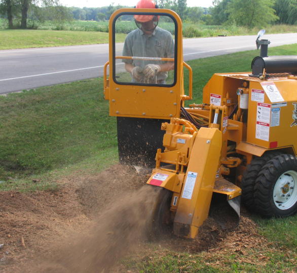 this image shows stump grinding service in Lake Forest, California