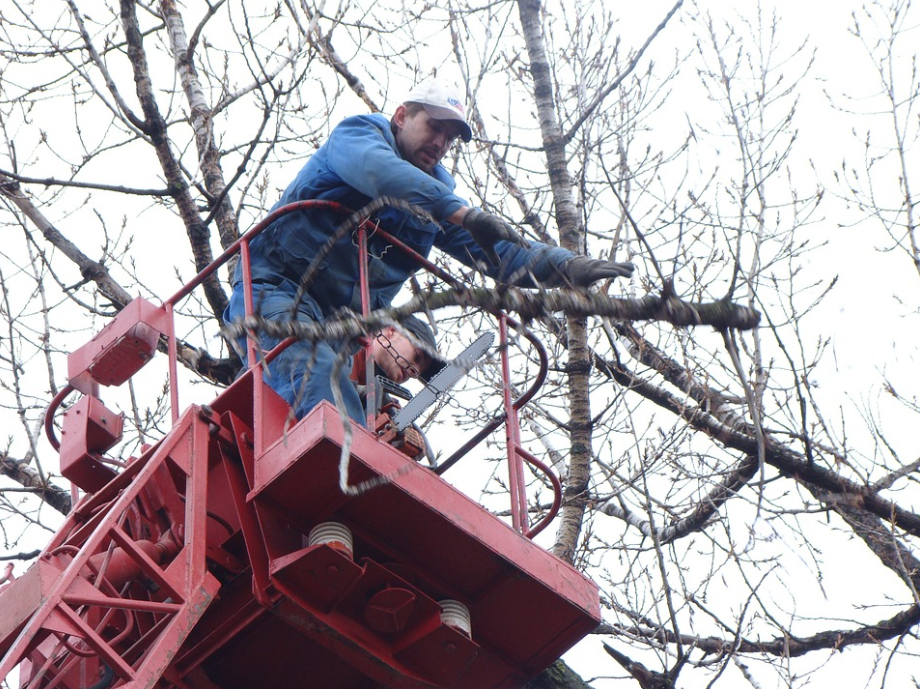 this image shows tree chipper services in lake forest, california