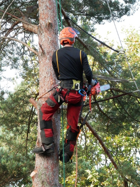 this image shows tree cutting in lake forest