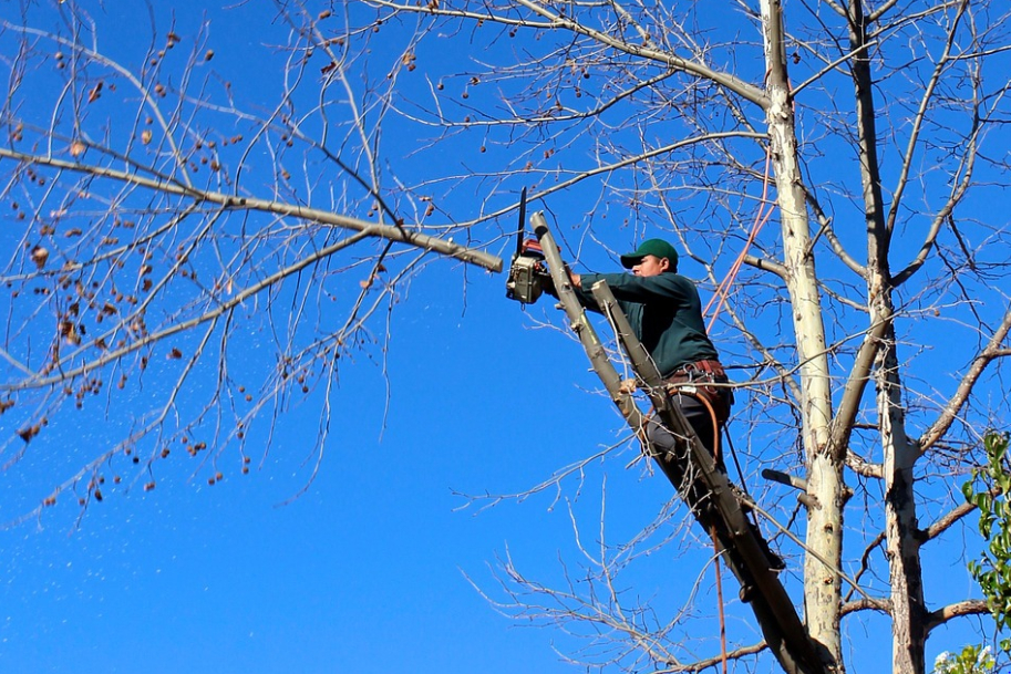 this image shows tree cutting in lake forest, california