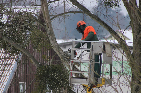 this image shows tree removal in lake forest