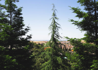this image shows tree care lake forest