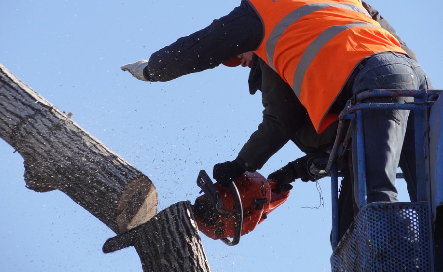 this image shows tree services in lake forest, california